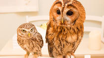Owl Cafe Experience in Akihabara , Tokyo, Cultural Tours