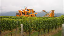 Full-Day Wine Gourmet and Scenic Delight Tour of Marlborough from Picton, Picton, Wine Tasting & ...