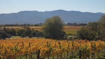 Half-Day Wine Gourmet and Scenic Delights Tour from Blenheim, Blenheim, Wine Tasting & Winery Tours