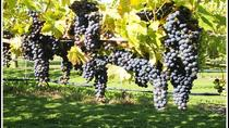Shore Excursion: Short Tour of Picton and Blenheim Wine Regions, Picton, Self-guided Tours & Rentals