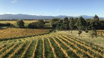 Winter Wine Gourmet and Scenic Pleasures of Marlborough: Group Tour, Blenheim, Wine Tasting & ...