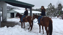 Winter Horseback Riding Adventure from Reno, Lake Tahoe, Horseback Riding