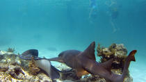 Shark and Stingray Snorkel Tour in Punta Cana, プンタカナ