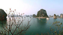Halong Bay Day Cruise Including Seafood Lunch from Hanoi, Hanoi, Day Cruises