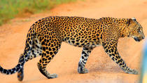 Yala Safari Private Day Trip from Bentota and Kalutara Areas, Bentota, Private Day Trips
