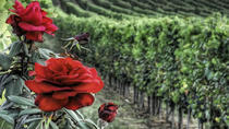 Private Tour nach Siena und Montalcino von Florenz, Florenz, Private Touren