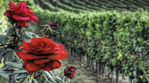 Private Tour to Siena and Montalcino from Florence, Florence