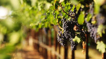 Los Angeles Tour: Malibu Wine Country , Los Angeles, Wine Tasting & Winery Tours