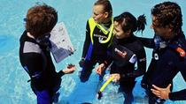 Discover Scuba Diving from Koh Samui, Koh Samui, Scuba Diving