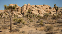 Joshua Tree National Park SUV or Van Tour, Palm Springs, 4WD, ATV & Off-Road Tours
