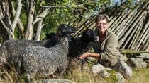 Picnic with the Sheep 2-Day Farm Tour, Central Sweden, Overnight Tours