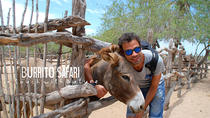 Hiking Tour in the Baja Peninsula with a Donkey, Los Cabos, Hiking & Camping