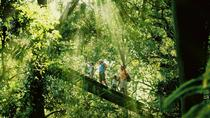 Gold Coast Lamington National Park and Tamborine Mountain 4WD Ecotour, Gold Coast, 4WD, ATV & ...