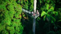 Mount Tamborine Day Trip from the Gold Coast Including Skywalk, Gold Coast, Day Cruises