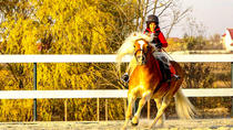 Bucharest Horse Riding Experience, Bucharest, Nature & Wildlife