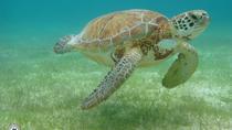 Sea Turtle Zip-Lining Expedition, Playa del Carmen, Ziplines