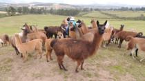 2-DAYS PRIVATE TOUR OTAVALO INDIAN MARKET AND SURROUNDINGS, Quito, Market Tours