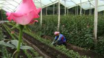 Rose Plantation, Equator Line and Otavalo Market Private Tour, Quito, Market Tours