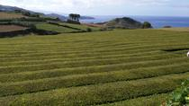Azores - Walking and Guied Tour in Tea Plantation, Ponta Delgada