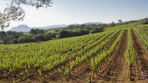 Private Day Trip: Wine Tasting Tour Including Pinic Lunch From Cannes, Cannes, null
