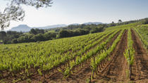 Private Provençal Wine-Tasting Tour with Picnic Lunch from Cannes, Cannes, Private Sightseeing ...