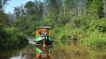 4-Day Private Orangutan and Bornean Primates Tour from Pangkalanbuun, Indonesia, Private ...