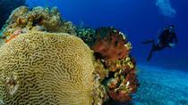2-Tank Certified Dive Excursion in Cozumel, Cozumel, Scuba Diving