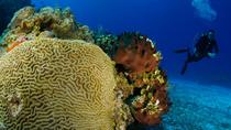 3-Hour Certified Scuba Diving Tour with Two Tanks in Cozumel, Cozumel, Scuba Diving