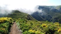 Fanal Assobiadores - Levada Walk, Funchal, Walking Tours