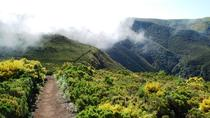 Fanal Assobiadores - Mountain Walk, Funchal, Walking Tours
