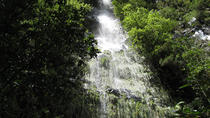 Hidden Corners: Levada Walk from Funchal, Funchal, Walking Tours