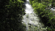 Hidden Corners - Levada Walk, Funchal, Walking Tours