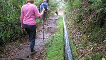 Levada Walk from Ribeiro Frio to Portela, Funchal, Walking Tours