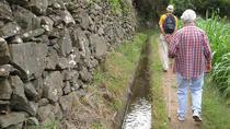 Maroços Mimosa Valley - Levada Walk, Funchal, Walking Tours