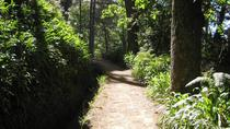 Paradise Valley - Levada Walk, Funchal, Walking Tours