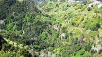 Referta Castelejo Levada Walk from Funchal, Funchal, Walking Tours