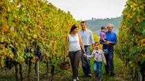 Messina Winery and Beach Tour, Messina, Wine Tasting & Winery Tours