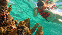 Full-Day Snorkeling Adventure from Cancun and Riviera Maya, Cancun, Snorkeling
