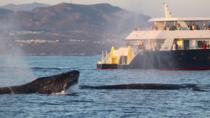 Whale Watching Discovery Cruise, Los Cabos, Dolphin & Whale Watching