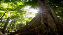 St Lucia Shore Excursion: Rainforest Walk