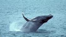 Whale Watching and Dolphin Spotting Cruise from the North Island, St Lucia, Dolphin & Whale Watching