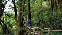 One day tour Doi Inthanon National Park (private tour), Chiang Mai, Attraction Tickets