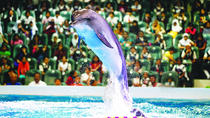 2-Day Afternoon Desert Safari, Dubai Dolphinarium and Half-Day City Tour From Dubai , Dubai, ...