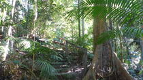 Kuranda Guided Interpretive Rainforest Walk Including Refreshments, Cairns & the Tropical North