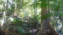 Kuranda Interpretive Interpretive Rainforest Walk Incluindo Refrescos, Cairns & the Tropical North, Walking Tours