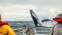 Multi-Day Whale Tour to Quebec City and Tadoussac, Montreal