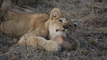 14-Day Tour of South Africa from Johannesburg, Johannesburg, Multi-day Tours