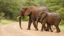 4-Day Kruger National Park Safari Adventure, Kruger National Park, Multi-day Tours