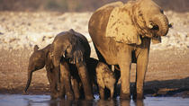 4-Day Namibia Etosha Safari from Windhoek or Swakopmund, Windhoek, Multi-day Tours