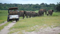 8-Day Botswana and Namibia Tour from Maun, Maun, Multi-day Tours